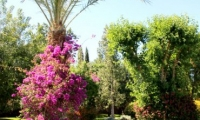 Beautiful bouganvilla at Villa Dinari, luxury acommodtion in Marrakech